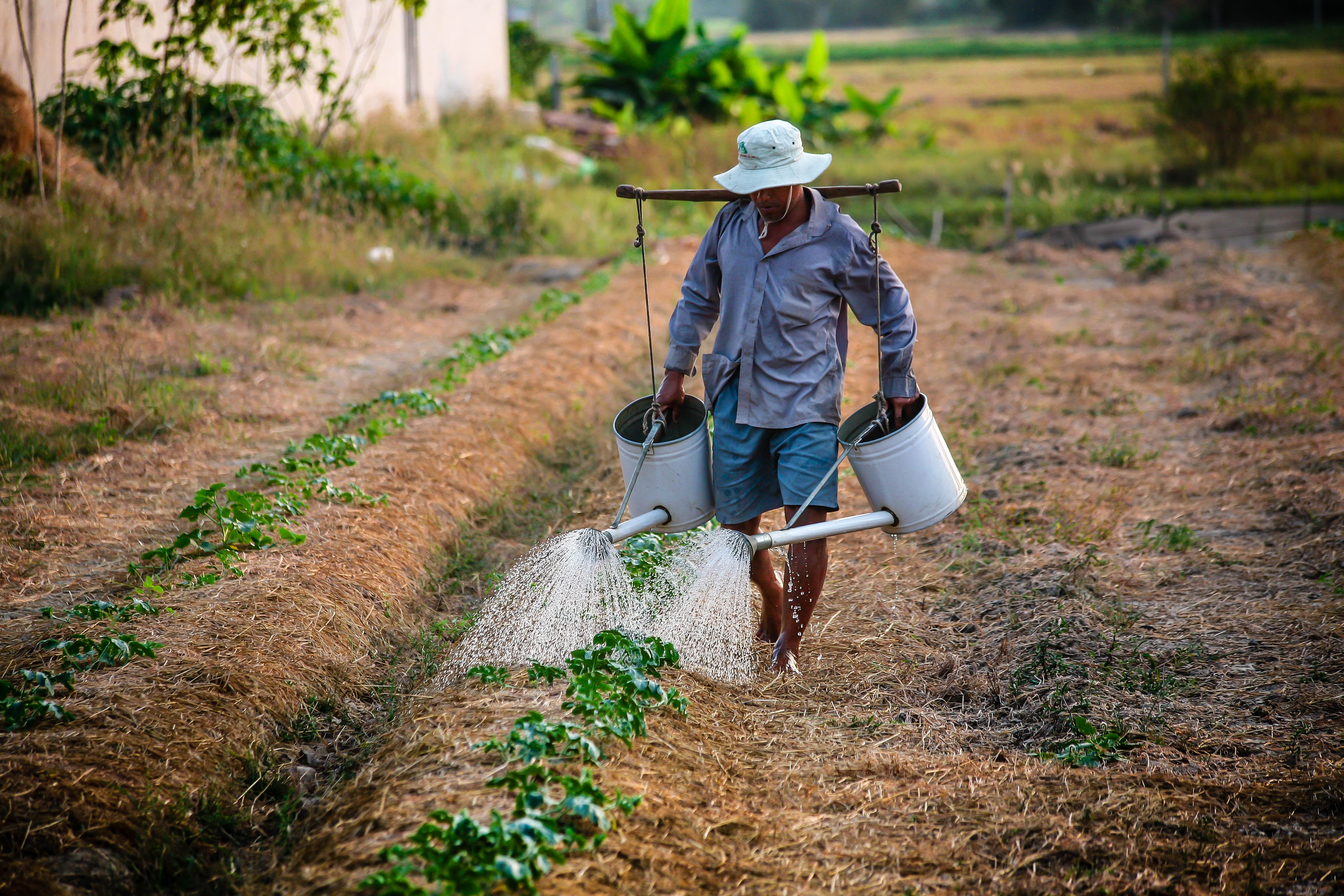 watering-watering-can-man-vietnam-162637 (1)